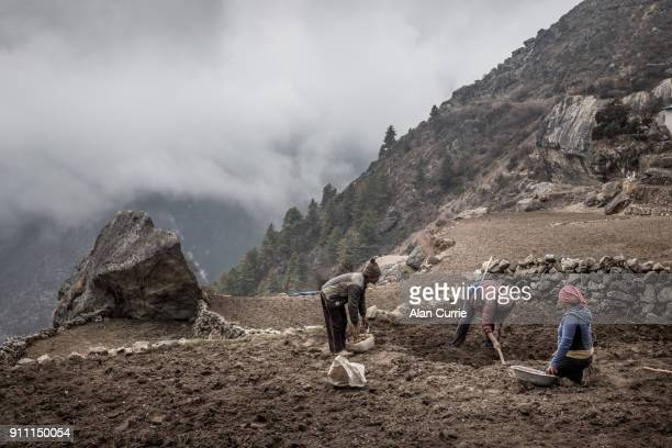 group of field workers at namche bazar, nepal, digging in the fields - solu khumbu stock pictures, royalty-free photos & images
