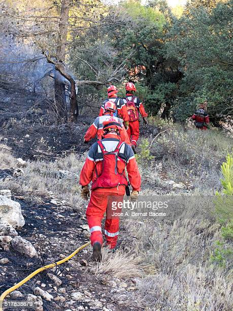 Group of firefighters lined up in a forest fire