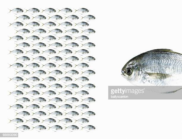 group of fish facing a large fish. - big fish stock pictures, royalty-free photos & images