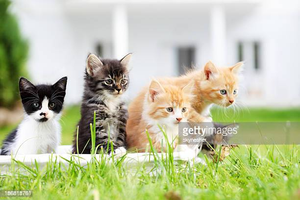 Group of five beautiful cats.