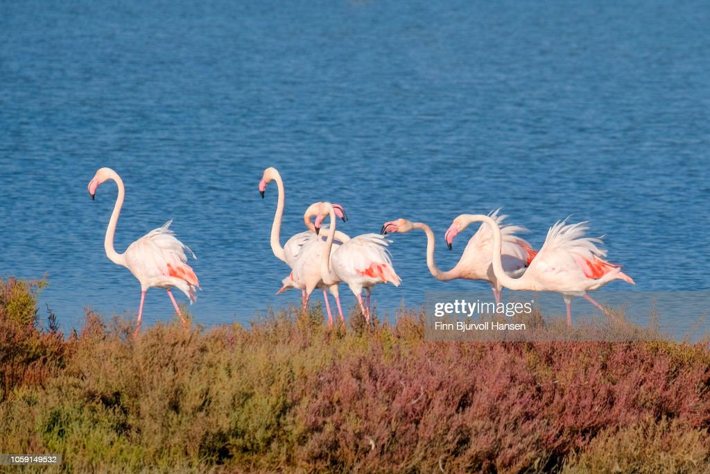 Group of flamingoes standing in the water : Stock Photo