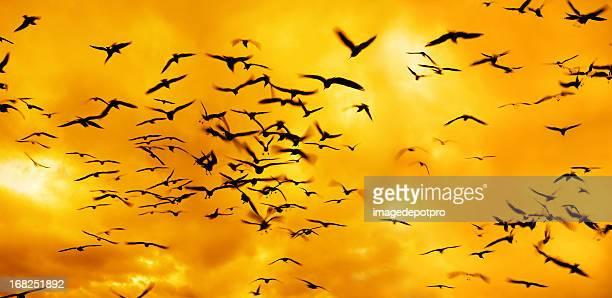 group of flying birds over sunset