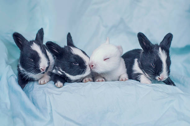 Group Of Four Newborn Baby Bunnies Wall Art