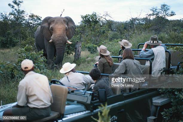 Group of friends on off road vehicle looking at elephant