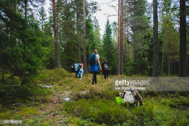 groep vrienden uit in het bos om eetbare paddestoel te plukken - foerageren stockfoto's en -beelden