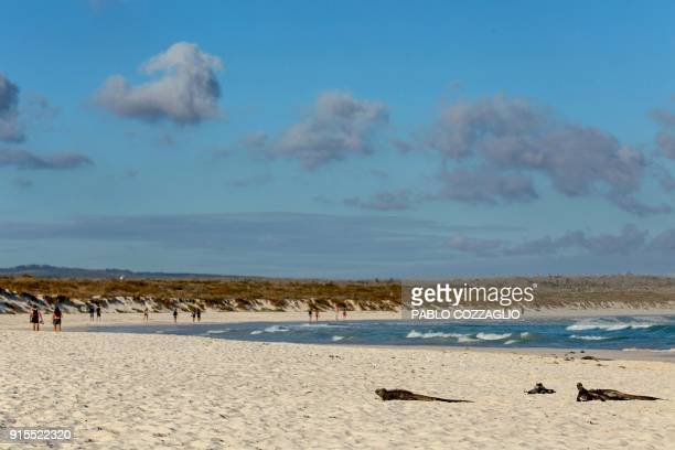 A group of Galapagos marine iguanas sunbathe next to tourists at Tortuga Bay beach in Santa Cruz Island Galapagos Ecuador on January 20 2018...