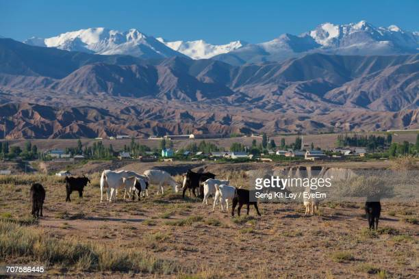 group of goats grazing against mountains - bishkek stock pictures, royalty-free photos & images