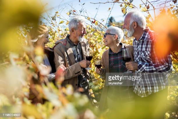 group of happy seniors talking while drinking wine in vineyard. - wine tasting stock pictures, royalty-free photos & images