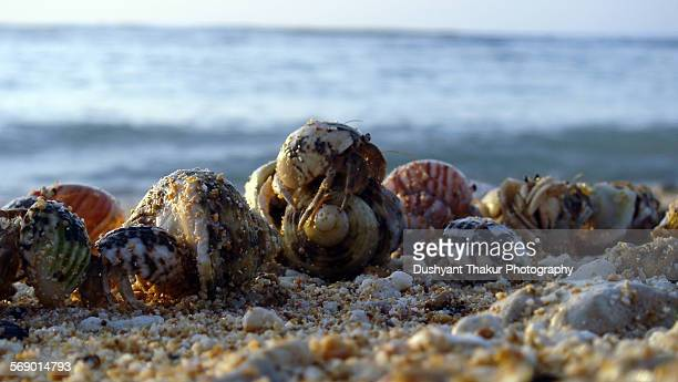 a group of hermit crabs swapping shells - hermit crab stock pictures, royalty-free photos & images