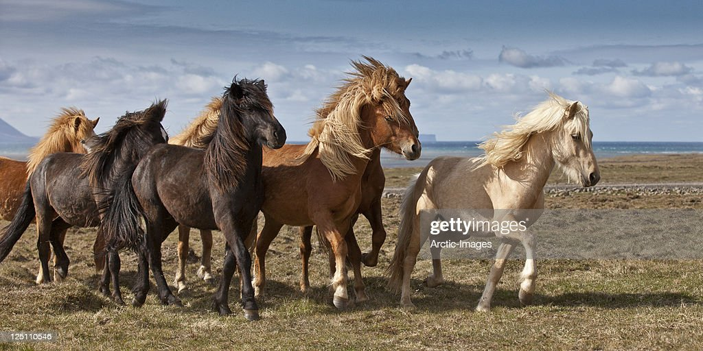 Group of Horses by the sea : Stock Photo