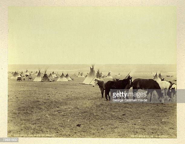 A group of horses graze in the foreground as a Blackfoot Indian encampment spreads into the background behind them Blackfeet Indian Reservation...