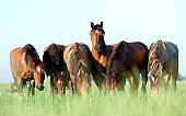 Group of horses grazing in a meadow.