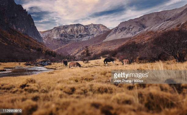 Group of horses grazing in natural setting with mountains in background