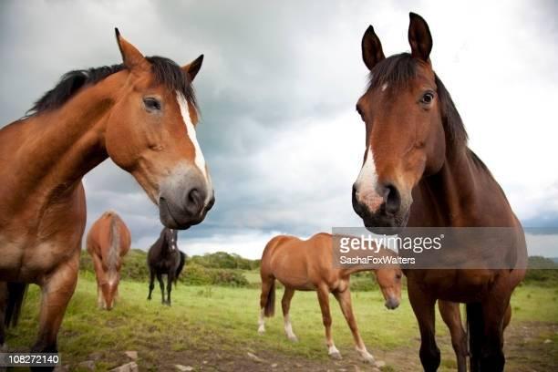 groupe de chevaux - cinq animaux photos et images de collection