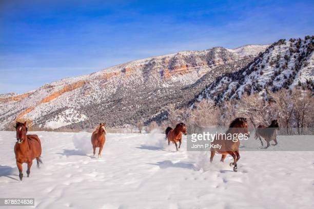 Group of horses running on snow covered landscape