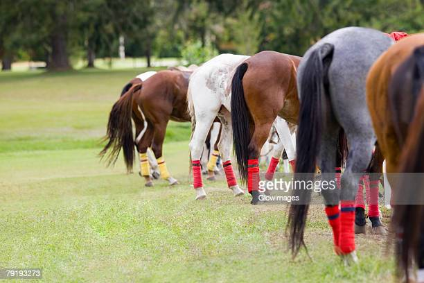 Group of horses standing in a row