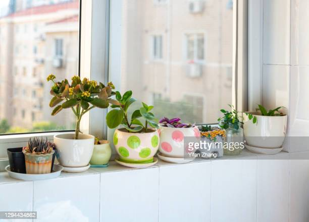a group of houseplants in a line on the windowsill - changzhou stock pictures, royalty-free photos & images