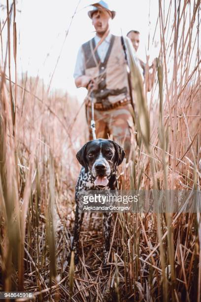 group of hunters with their dogs going for hunting action - hunting dog stock pictures, royalty-free photos & images