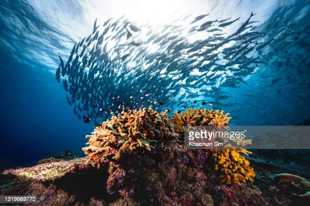 group of jackfish underwater - underwater film camera stock pictures, royalty-free photos & images