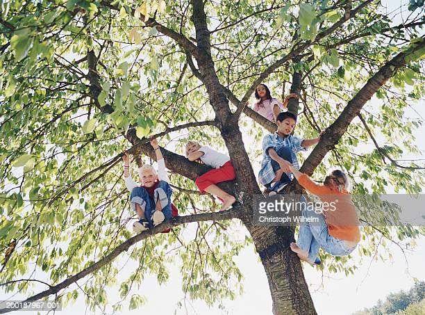 Group of kids (8-10) on tree