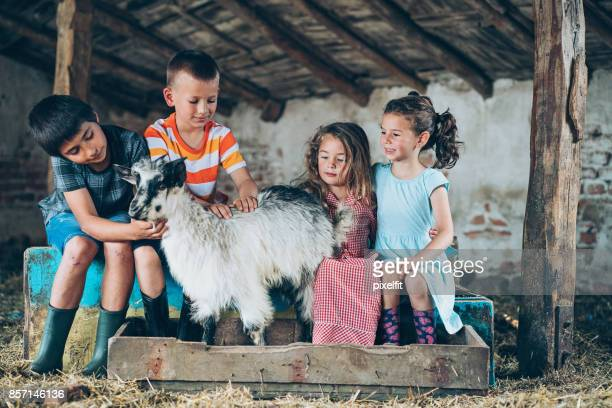 Group of kids with a goat in the barn
