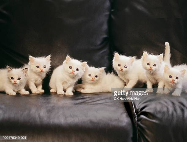 Group of kittens on couch