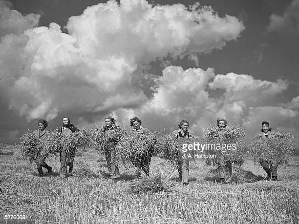 A group of land girls bringing in sheaves of wheat from a field reclaimed for the war effort from 400acres of unused land on the Sussex Downs 13th...
