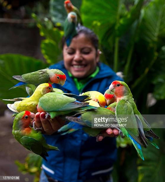 Group of lovebirds eat from the hands of a woman at the aviary El Nido, on September 23 in Ixtapaluca, State of Mexico, near Mexico City. The aviary...