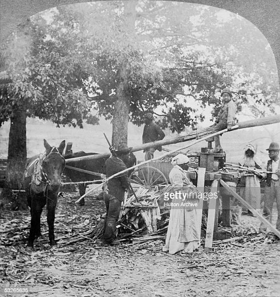 Group of men and women, presumably enslaved, grind sugar with the help of mules and a simple machine on a farm, Georgia, mid 19th Century. A child...