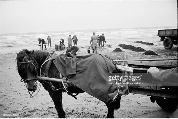 Digging on the beach in Hartlepool in northeast England circa 1962