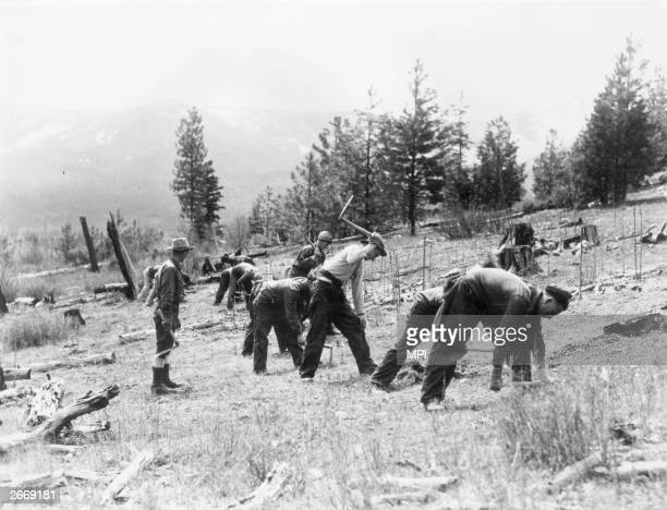 Group of men planting trees during a Civilian Conservation Corps project on the Nett Lake Reservation in Minnesota.
