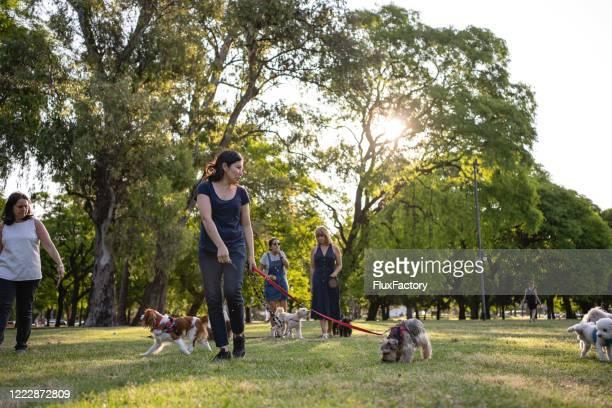 公共の公園で犬を散歩させる中年女性のグループ - 服従 ストックフォトと画像