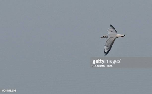 A group of migratory birds are seen frolicking at Okhla Bird Sanctuary on January 9 2016 in Noida India With the onset of winter season hundreds of...