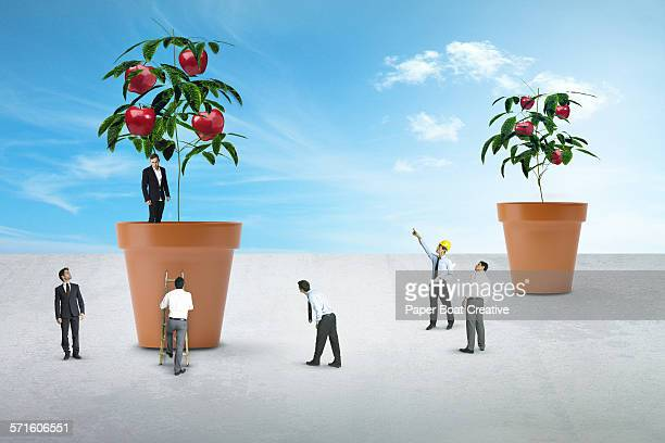 Group of miniature businessmen growing apple tree