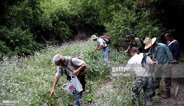 A group of nature enthusiasts pick wild radishes while foraging for wild food in Hahamongna Watershed Park