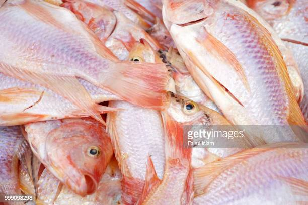Fish Symbol Text Stock Photos And Pictures Getty Images