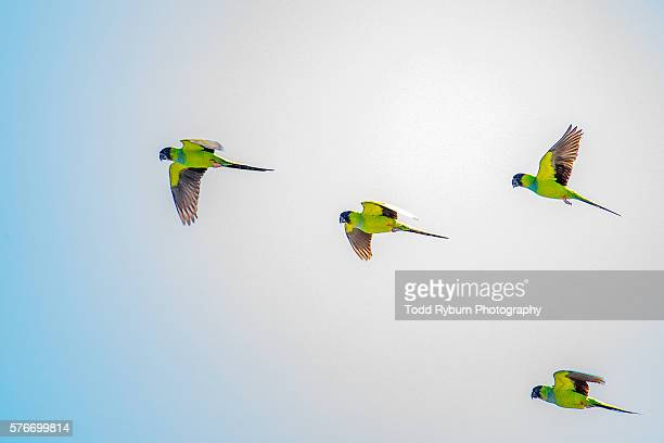 group of parrots - oiseau tropical photos et images de collection