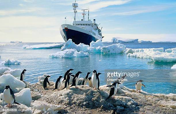 Group of penguins on beach, ship in background
