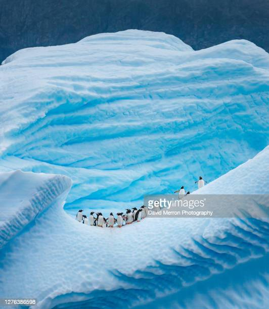 a group of penguins stand atop a vibrant blue iceberg in antarctica - antarctica stock pictures, royalty-free photos & images