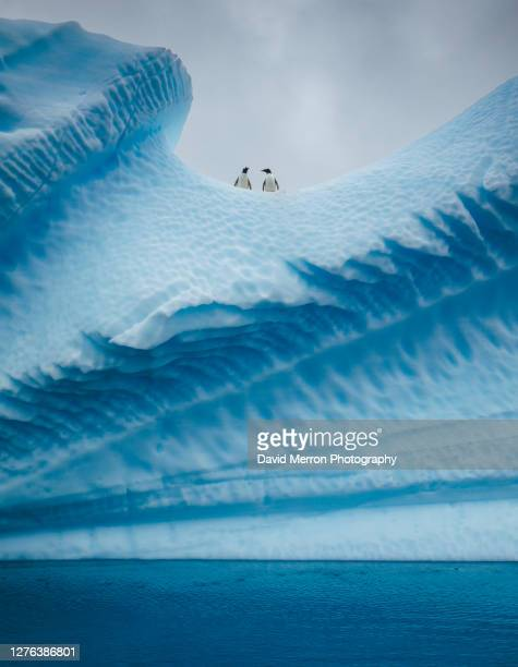 a group of penguins stand atop a vibrant blue iceberg in antarctica - coral stock pictures, royalty-free photos & images