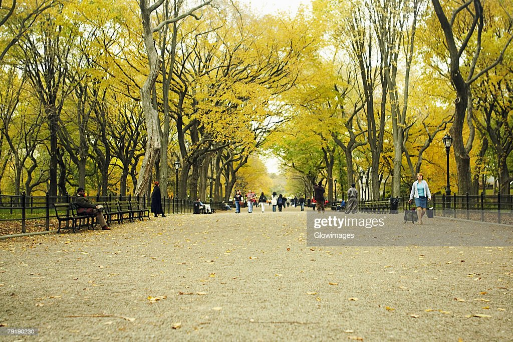 Group of people in a park, Central Park, Manhattan, New York City, New York State, USA : Foto de stock