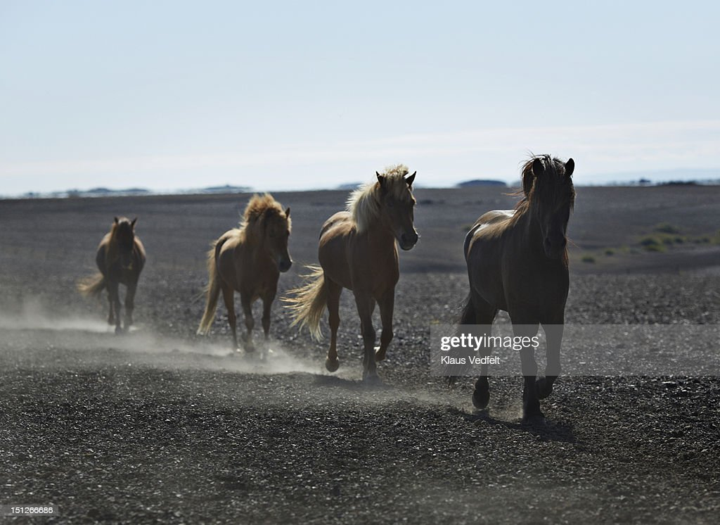 Group of people on horses riding in dust cloud : Stock Photo