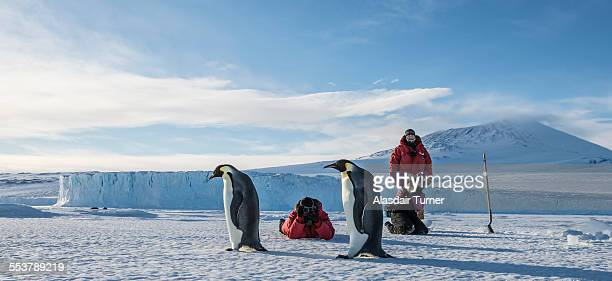 a group of people shoot photos emperor penguins near mcmurdo station, antarctica. - pinguïn stockfoto's en -beelden