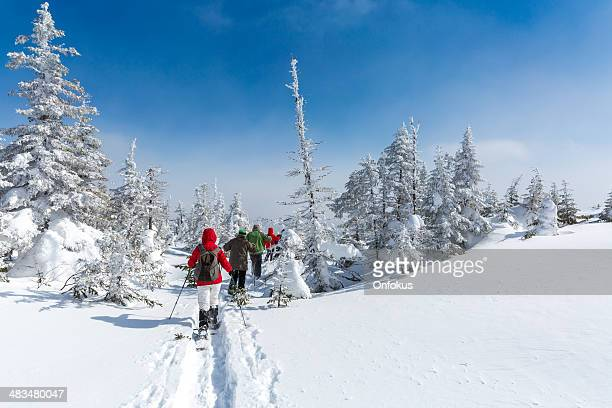 Group of People Snowshoeing in Winter Forest