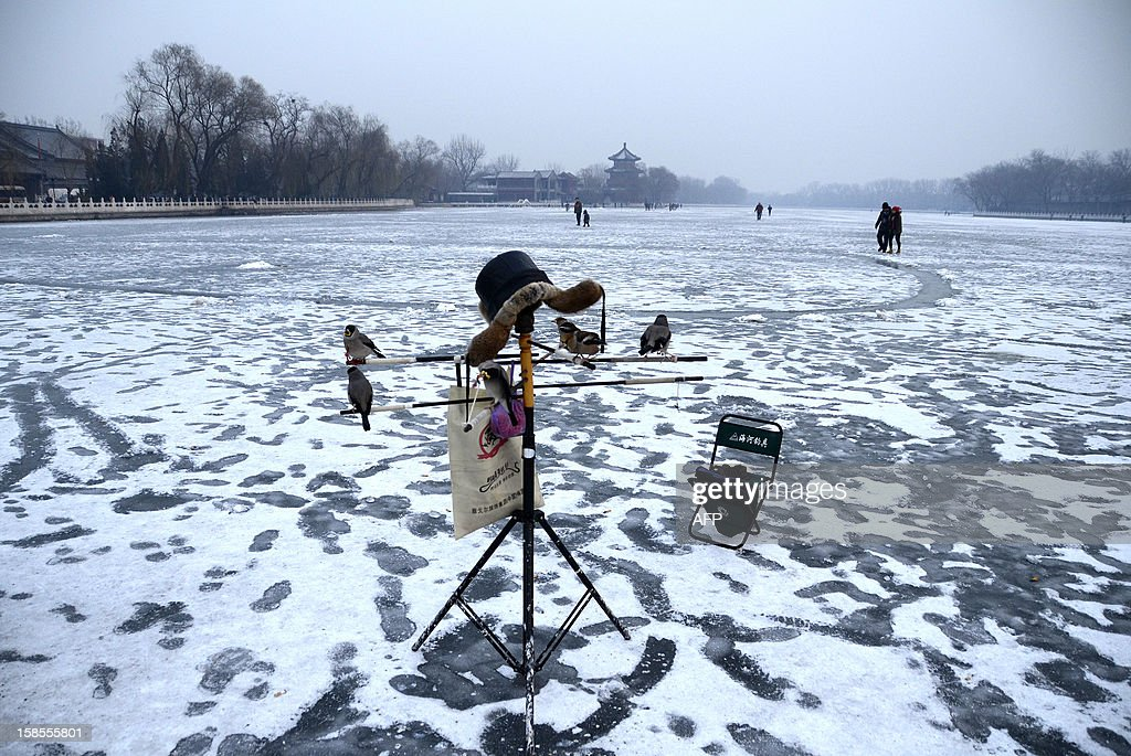 A group of pet birds are seen on a tripod at a frozen lake in Beijing on December 19, 2012. China will allow transit passengers from 45 countries including the US, Canada and all members of the EU to spend up to 72 hours in Beijing without a visa from January 2013, city authorities said.