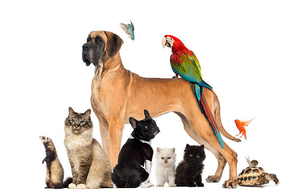 Free pet Images, Pictures, and Royalty-Free Stock Photos ...