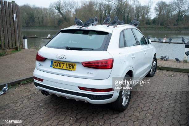 Group of pigeons roost on the roof of an Audi SUV in Isleworth on 25th January 2020 in London, United Kingdom. For some reason these birds have...