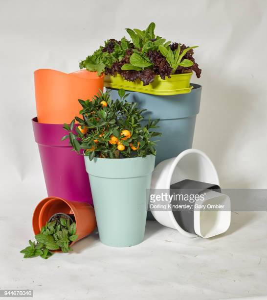 Group of plastic plant containers