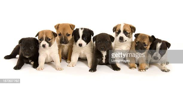 Group Of Puppies Stock Photos And Pictures Getty Images