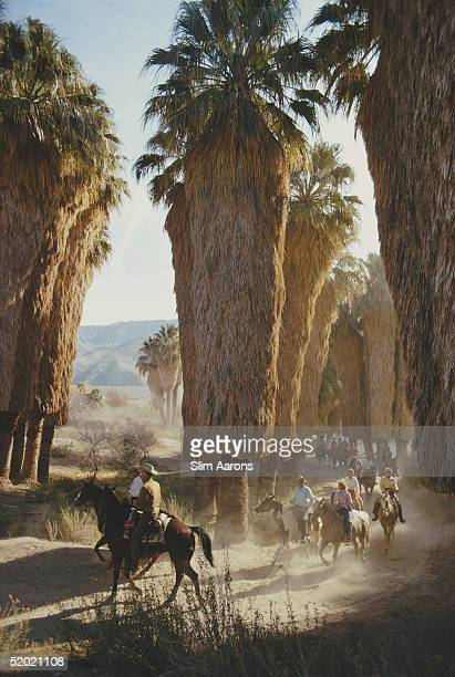 A group of riders among Washingtonia palms in Andreas Canyon Palm Springs southern California January 1970